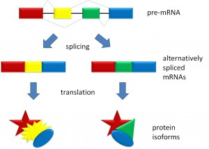 Splicing_overview