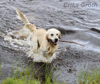 ErikaGroth201307apporterandehund