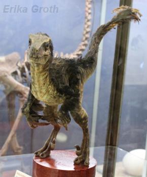 Som jag sagt någon gång tidigare så anses numera de flesta dinosaurier ha haft en sorts päls av fjädrar.
