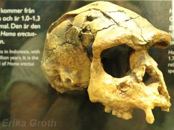 Det pågår för tillfället en utställning om människans ursprung.