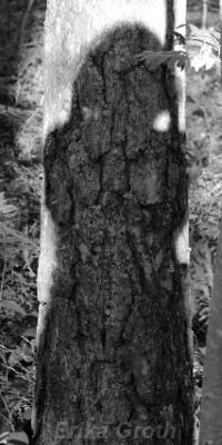 ErikaGroth201308självporträttpåträd