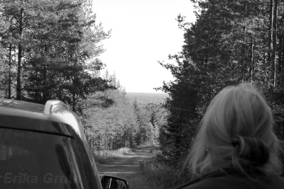 En skogsvy som ger lite norrländsk hemlängtan.