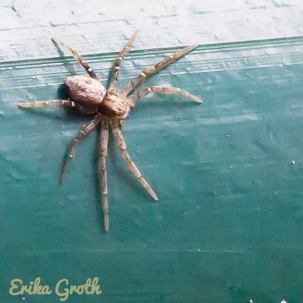 ErikaGroth-5261