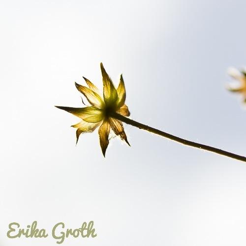 ErikaGroth-5572