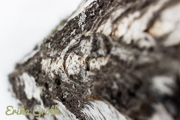 Tittar neråt längs stammen. Looking down along the stem.