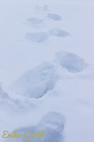 Jag fick plumsa genom snön för att komma till björken. I had to wade through snow to get to the birch.