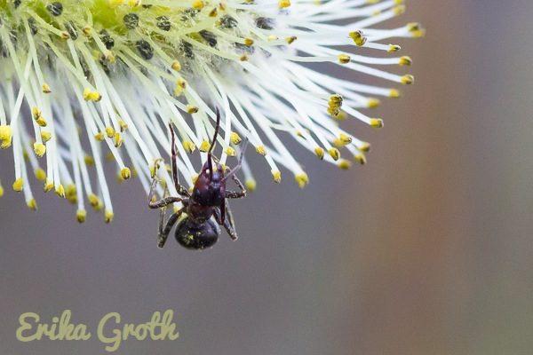 En myra täckt av pollen.