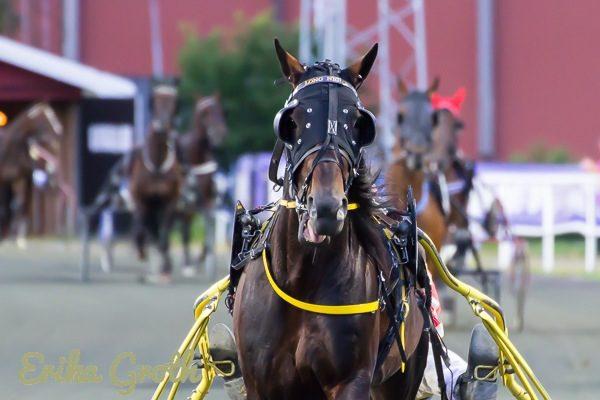 En cool look är viktig även om man är en häst.